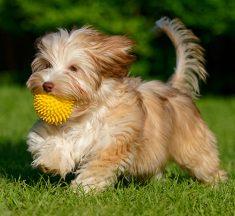 ¿Vives en departamento? Elige la mejor raza de perro para tus hijos