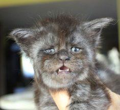 ¡Valkyrie, la gatita humana que robará tu corazón!