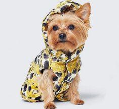 ¡Esa vida de perros! La colección canina de Moschino y H&M
