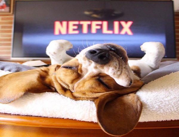 ¡Podrías morir de ternura con Dogs! El documental que te hará valorar a tu perro