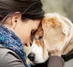 ¿Qué tan doloroso es perder un perro?